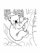 Imprimer le coloriage : Koala, numéro 5a72fa2e