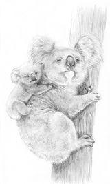 Imprimer le coloriage : Koala, numéro 603440