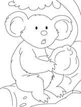 Imprimer le coloriage : Koala, numéro 605835