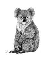 Imprimer le coloriage : Koala, numéro 617571