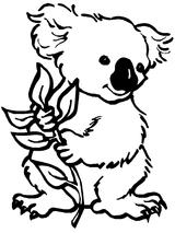 Imprimer le coloriage : Koala, numéro 621344