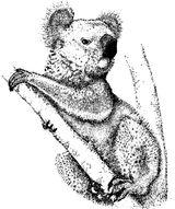 Imprimer le coloriage : Koala, numéro 624739