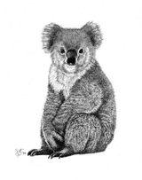 Imprimer le coloriage : Koala, numéro 671584