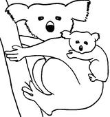 Imprimer le coloriage : Koala, numéro 677753