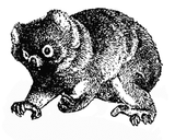 Imprimer le coloriage : Koala, numéro 677754