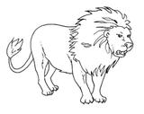 Imprimer le coloriage : Koala, numéro 678551