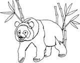 Imprimer le coloriage : Koala, numéro 678552