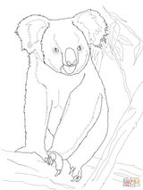 Imprimer le coloriage : Koala, numéro 888156dc