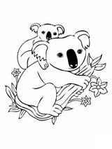 Imprimer le coloriage : Koala, numéro b1b10808