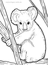 Imprimer le coloriage : Koala, numéro b20f29d5