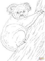 Imprimer le coloriage : Koala, numéro e197e4ce