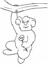 Imprimer le coloriage : Koala, numéro efab27e8