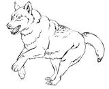 Imprimer le coloriage : Loup, numéro 128429