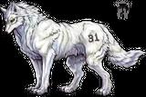 Imprimer le dessin en couleurs : Loup, numéro 20765