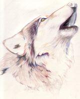 Imprimer le dessin en couleurs : Loup, numéro 300647