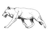 Imprimer le coloriage : Loup, numéro 4001
