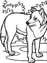 Imprimer le coloriage : Loup, numéro 457
