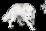 Imprimer le dessin en couleurs : Loup, numéro 499863