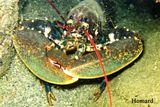 Imprimer le dessin en couleurs : Mollusques, numéro 396242