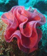 Imprimer le dessin en couleurs : Mollusques, numéro 396245
