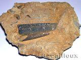Imprimer le dessin en couleurs : Mollusques, numéro 396246