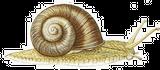 Imprimer le dessin en couleurs : Mollusques, numéro 396250