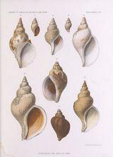 Imprimer le dessin en couleurs : Mollusques, numéro 446550