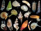 Imprimer le dessin en couleurs : Mollusques, numéro 454504
