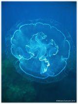 Imprimer le dessin en couleurs : Mollusques, numéro 606281