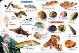 Imprimer le dessin en couleurs : Mollusques, numéro 618034