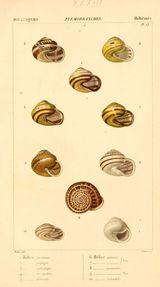Imprimer le dessin en couleurs : Mollusques, numéro 6d2b05e3