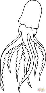 Imprimer le coloriage : Mollusques, numéro 8aa3baa8