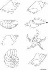 Imprimer le coloriage : Mollusques, numéro 9db090c