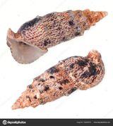 Imprimer le dessin en couleurs : Mollusques, numéro a145fe0f
