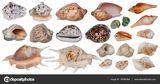 Imprimer le dessin en couleurs : Mollusques, numéro b8b5854d