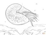 Imprimer le coloriage : Mollusques, numéro bec9ae88
