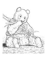 Imprimer le coloriage : Panda, numéro 418763