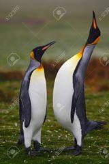 Imprimer le dessin en couleurs : Pinguoin, numéro 5ca1e2b8