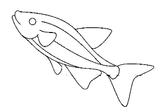 Imprimer le coloriage : Poisson, numéro 7845
