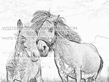 Imprimer le coloriage : Poney, numéro 310360