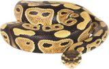 Imprimer le dessin en couleurs : Reptiles, numéro 22673
