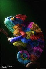Imprimer le dessin en couleurs : Reptiles, numéro 22680