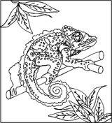 Imprimer le coloriage : Reptiles, numéro 23966