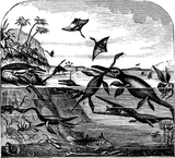 Imprimer le coloriage : Reptiles, numéro 23968