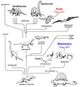 Imprimer le coloriage : Reptiles, numéro 23980