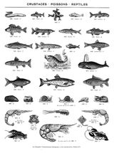 Imprimer le coloriage : Reptiles, numéro 23981