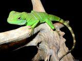 Imprimer le dessin en couleurs : Reptiles, numéro 24920