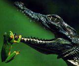 Imprimer le dessin en couleurs : Reptiles, numéro 24921