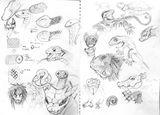 Imprimer le coloriage : Reptiles, numéro 25787