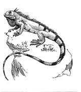 Imprimer le coloriage : Reptiles, numéro 25796